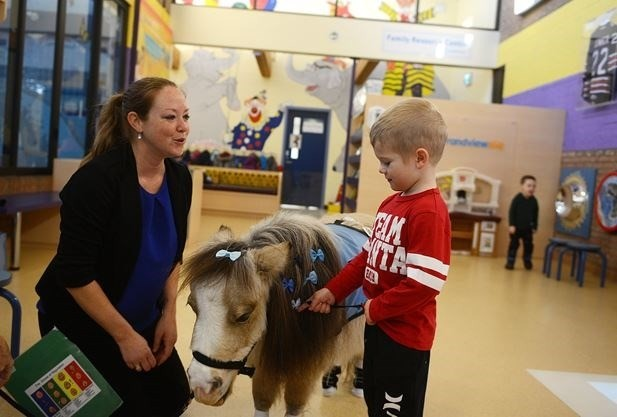 Tulip the Therapy Pony – A Dedicated Grandview Volunteer
